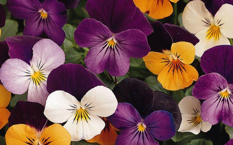 Τα λουλούδια μπορούν να μας κάνουν ευτυχισμένους!