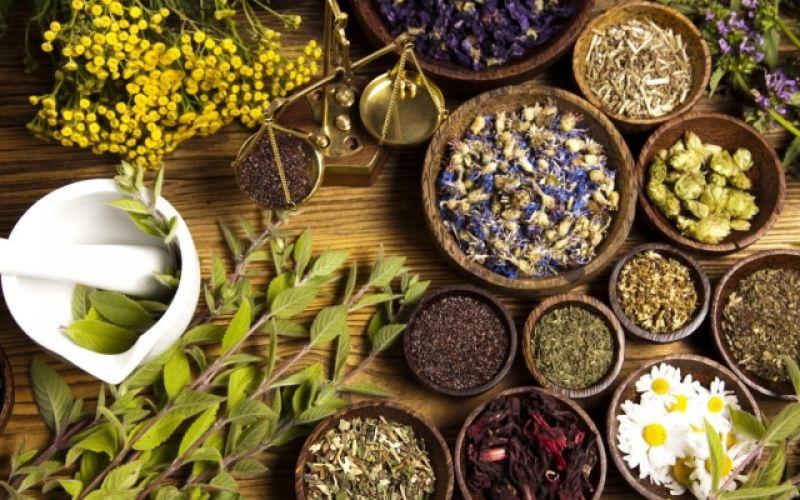 Όλα όσα πρέπει να γνωρίζουμε για τα φαρμακευτικά φυτά